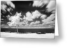 Infrared Landscape Greeting Card