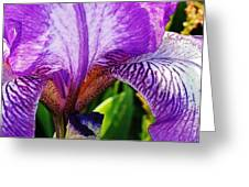 Iris Macro Greeting Card