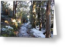 King Billy Forest Cradle Mountain Greeting Card