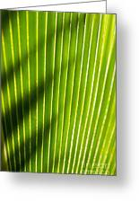 Leaf Close-up Greeting Card