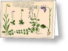 Linnaea Borealis, Linnaeuss Favorite Greeting Card