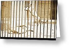 Lion Cage, Carnivore House, Philadelphia Zoo, C. 1900 Greeting Card