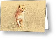 lioness Masai Mara, Kenya Greeting Card