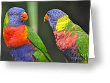 2 Lories In Discussion Greeting Card