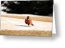Male Ring-necked Pheasant Greeting Card