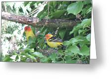 2 Male Western Tanagers Greeting Card