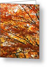 Maple Tree Foliage Greeting Card