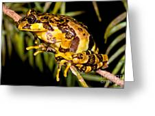 Marbled Wood Frog Greeting Card