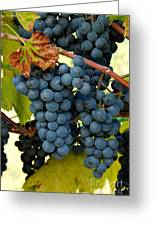 Marechal Foch Grapes Greeting Card