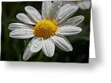 Marguerite Daisy Greeting Card