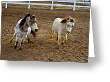 Miniature Horse Greeting Card
