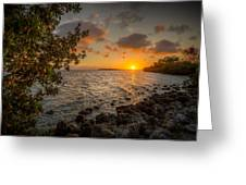 Morning At The Mangroves Greeting Card