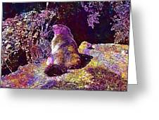 Mountain Marmot Wildlife Animals  Greeting Card