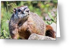 Mr. Marmot Greeting Card