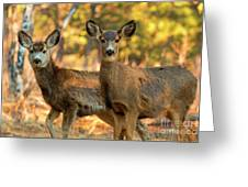 Mule Deer In The Woods Greeting Card