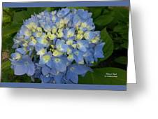 My Blue Hydrangeas Greeting Card