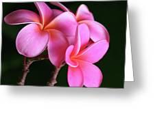 Na Lei Pua Melia Aloha He Ala Nei E Puia Mai Nei Pink Plumeria Greeting Card