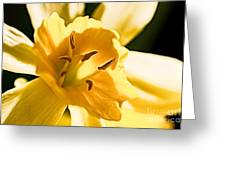 10553 Narcissus Superstar - Flower 080  Greeting Card