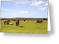 New Forest - Hampshire - Uk Greeting Card