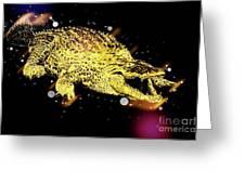Nile River Crocodile Greeting Card