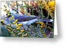 Noisy Miner In Oz Greeting Card