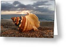 North Shore Seashell Greeting Card
