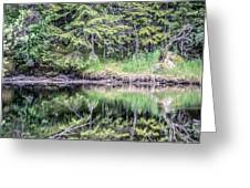 Northern Landscape And Nature In Alaska Panhandle Greeting Card