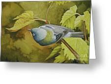 Northern Parula Greeting Card