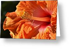 orange Hibiscus blossom Greeting Card