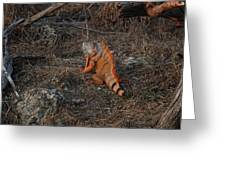 Orange Iguana Greeting Card