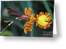 Orchid Expression 3892 Greeting Card