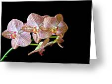 Orchid Phalaenopsis Flower Greeting Card