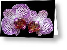 2 Orchids Greeting Card