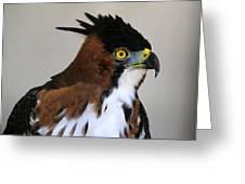 Ornate Hawk-eagle Greeting Card