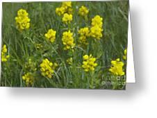 Panorama Hills Bluffs Greeting Card