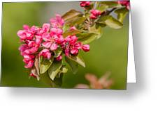 Paradise Apples Flowers Greeting Card