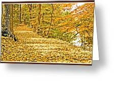 Path Through A Pennsylvania Deciduous Forest Autumn Greeting Card