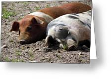 Pigs Greeting Card