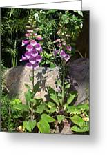 2 Pink Bell Flowers. Foxglove Greeting Card
