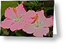 2 Pink Hibiscus Greeting Card