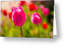 Pink Tulips Greeting Card