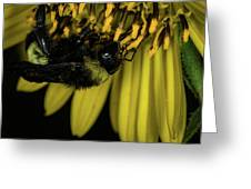 Pollen Collector 3 Greeting Card