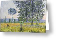 Poplars In The Sunlight Greeting Card