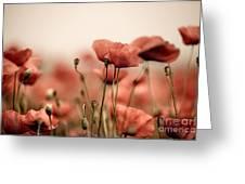 Poppy Dream Greeting Card