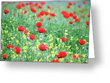 Poppy Flowers Meadow Spring Season Greeting Card