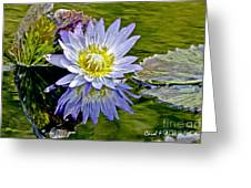 Purple Water Lily Pond Flower Wall Decor Greeting Card