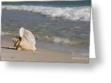Queen Conch On The Beach Greeting Card