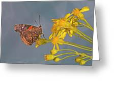 Red Admirable Butterfly Greeting Card