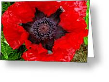 Red Poppy Photograph Greeting Card