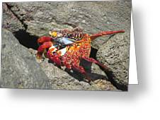 Red Rock Crab Greeting Card